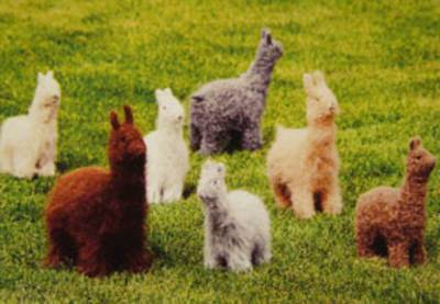 Alpacas and Llamas Fiber Trends