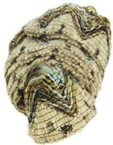 Katia Roma scarf yarn, 40 pebble
